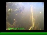 Дешевая камера для подводной съемки.
